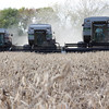 Several friends and family used their combines to help Tom Vonderheide last year and this year harvest his corn and bean fields.