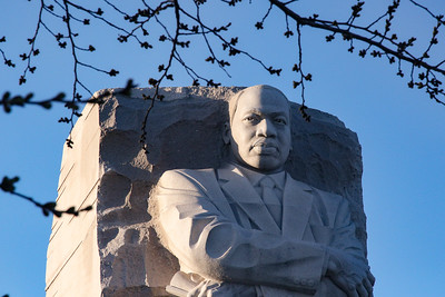 Cherry Blossoms and Martin Luther King, Jr. Memorial