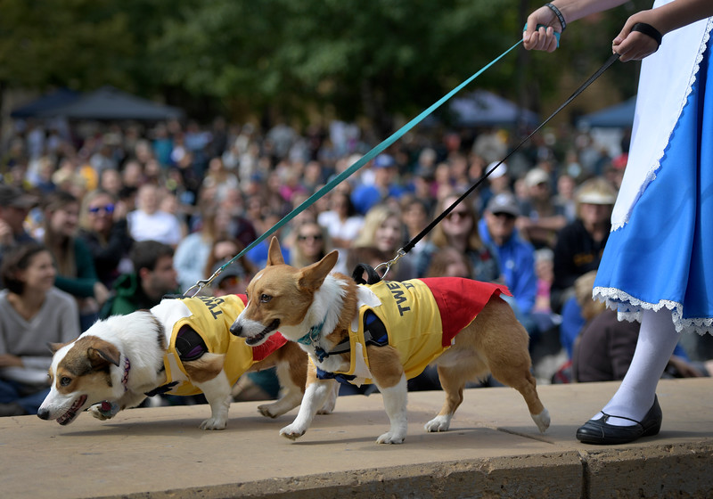 Two dogs and their human, dressed as characters from Alice and Wonderland, walk in front of the crowd during the costume contest during Tour de Corgi in Fort Collins, Colo. on Saturday, Sept. 28, 2019.