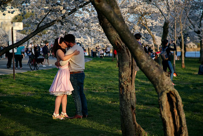 A couple kisses underneath Cherry Blossom trees at the Tidal Basin on the National Mall in Washington, D.C. on March 30, 2021
