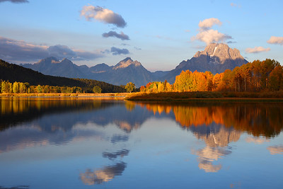 Fall Aspens in Sunlight at Oxbow Bend, Grand Teton National Park