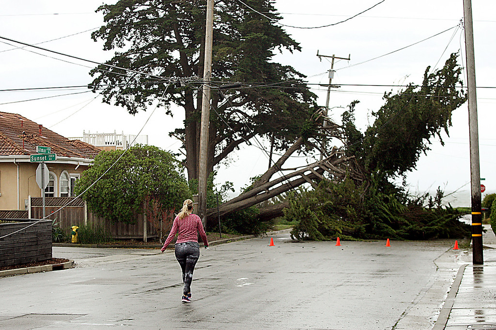 . A woman hustles down Almar Avenue to check on relatives living in a home on Sunset Avenue where a large cypress tree was blown down by heavy winds Friday morning.  (Dan Coyro -- Santa Cruz Sentinel)