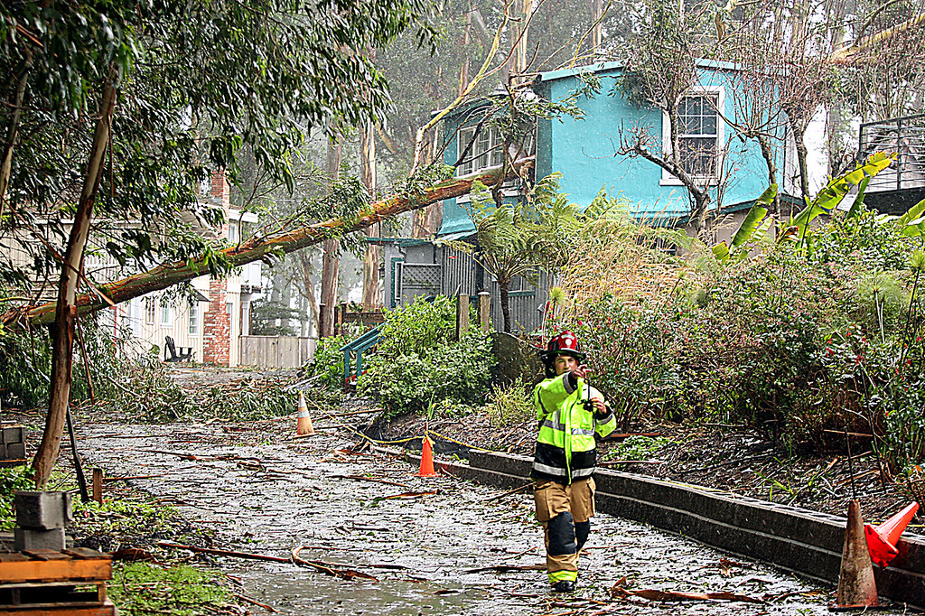 . Central Fire Capt. Steve Ramirez hustles away from a Fresno Street home that was evacuated after a eucalyptus tree crashed through the roof Friday morning.  (Dan Coyro -- Santa Cruz Sentinel)