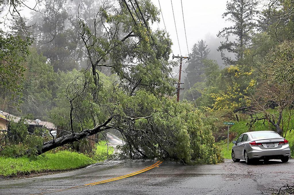 . A motorist squeezes around a fallen tree on Glen Canyon Road Thursday afternoon. (Shmuel Thaler -- Santa Cruz Sentinel)