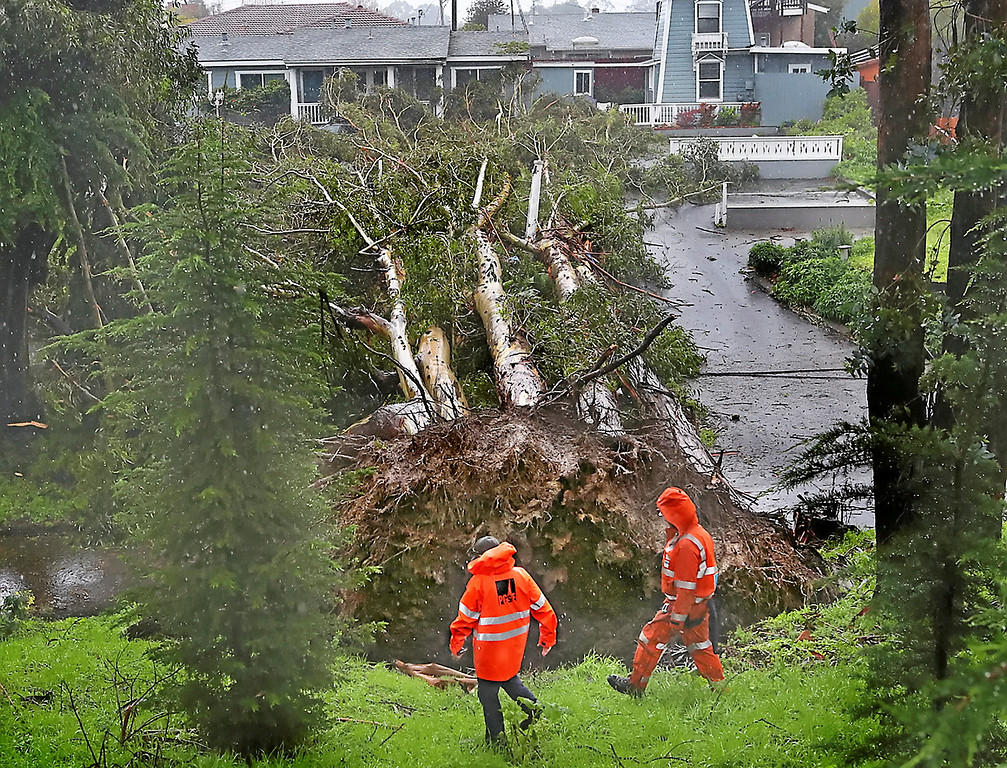 . PG&E workers check power lines that were brought down by a stand of eucalyptus trees that came down across Johans Beach Drive in Live Oak Thursday. (Shmuel Thaler -- Santa Cruz Sentinel)