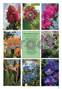 Winter Blooms of Murcia Pictures, Page 51