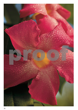 Winter Blooms of Murcia Article, Page 50