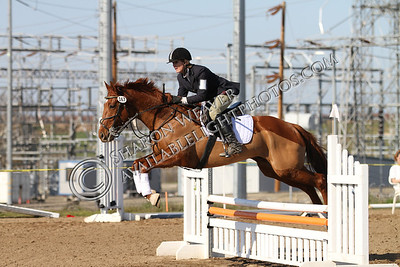 Horse167_20130217_3231