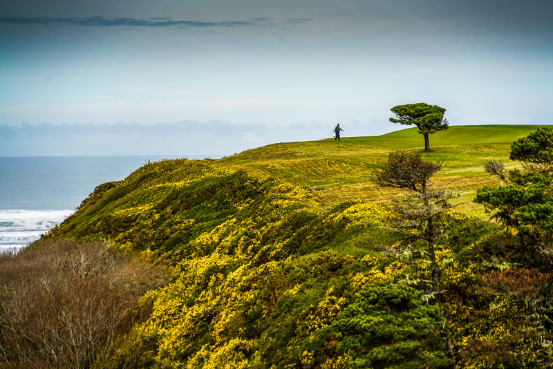 Looking across the ravine to the Bandon Dunes course, and a grounds crew member walking towards a windswept tree.