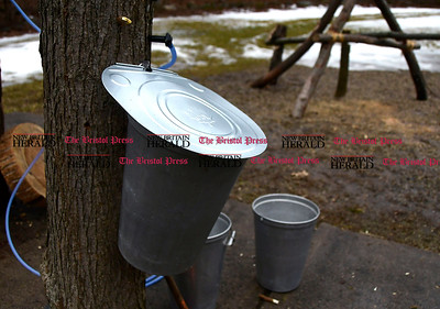 2/25/2017 Mike Orazzi   Staff Items used for making maple syrup during the 7th Annual Maple Sugaring and Pancake Breakfast Fundraiser at Indian Rock Nature Preserve in Bristol Saturday morning.