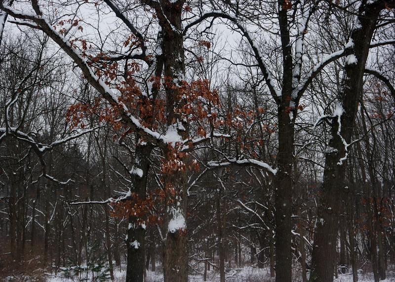 2/7  Snow on Snow