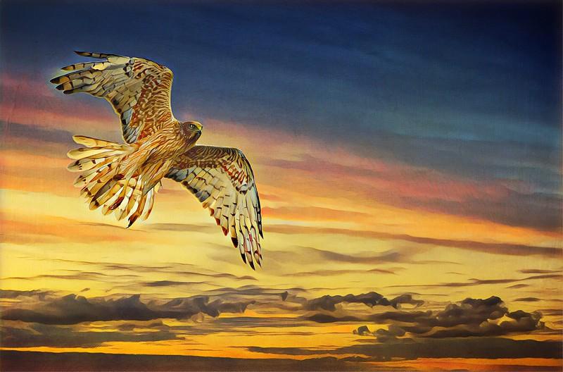 Marsh Harrier (Graphic version.)