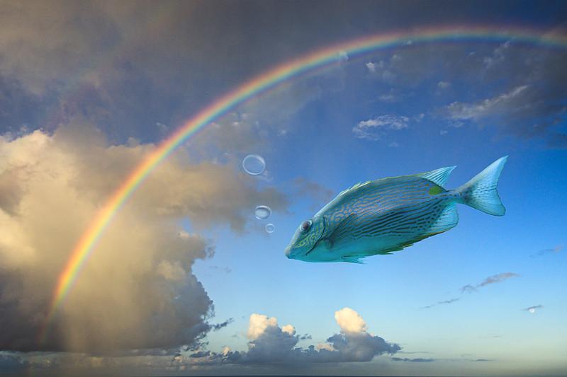 """""""It's Raining Fish! Hallelujah!"""""""