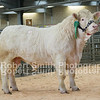 Lot 35 sold for 4500 gns from Mr R A Owen
