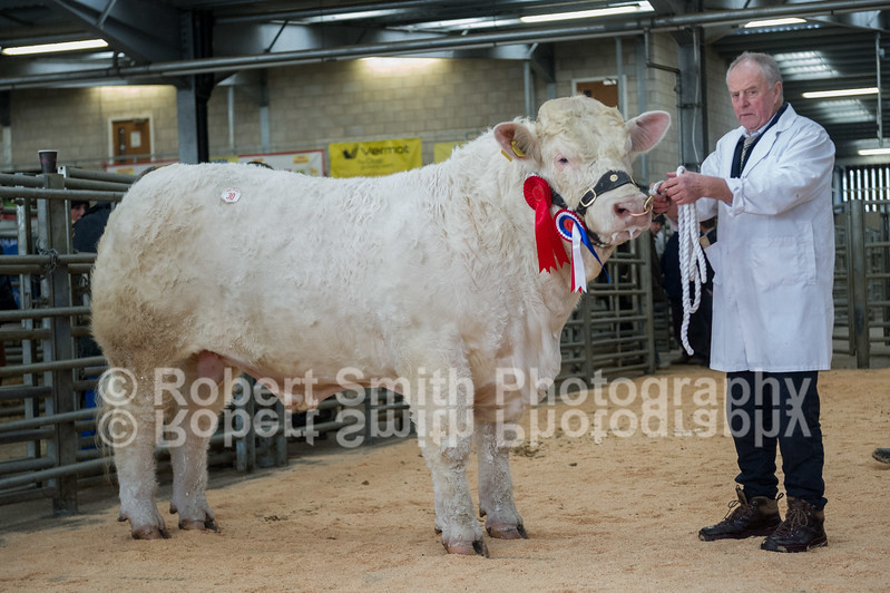 Champion lot 30 sold for 5000 gns
