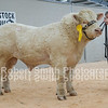 lot 10 sold for 4600 gns from Mrs A Orr-Ewing