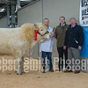 Reserve Champion lot 11 from Mr G M Jones sold for 5800 gns