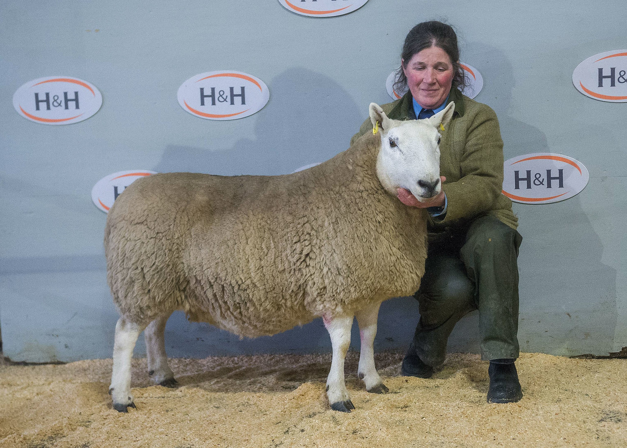 lot 45 Champion (NCC Hill) sold for 1100 a gimmer from Kelsocleugh Farming