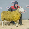 Lot 15 - 2 shear ewe sold for £900 from Ritchie Strawhorn (Broomhillbank) Lockerbie