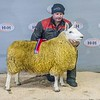 Lot 14 - Champion (NCC Park) - Not Sold - 2 shear ewe from Ritchie Strawhorn (Broomhillbank) Lockerbie