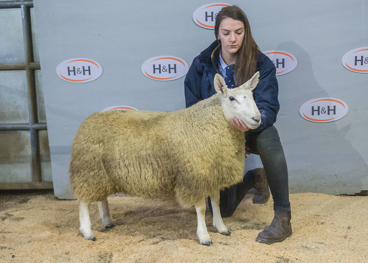 lot 33 - sold for £800 ewe hogg from K O Stones Nun Cote Nook Marrick Richmond_-2-2.NEF