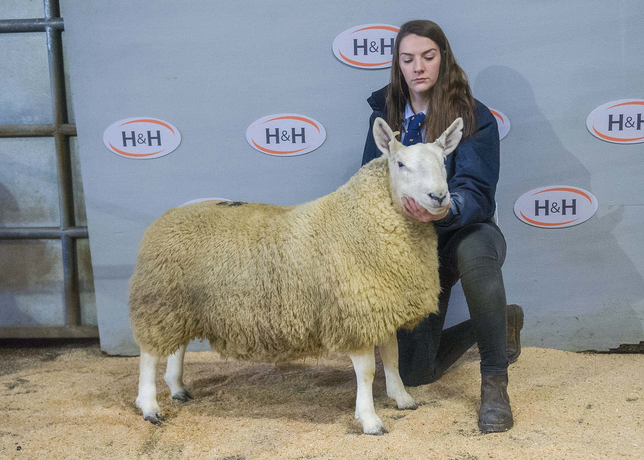 lot 37 - sold for £1000 ewe hogg from K O Stones Nun Cote Nook Marrick Richmond_-3.NEF