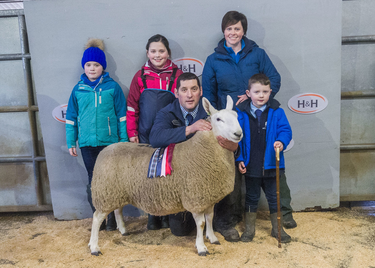 lot 48 - Reserve Champion (NCC Park) sold for £1600 a 1 shear from W & J Thomson Hownam Grange