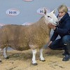 Lot 82 sold for £1100 - 1 crop ewe from Martin Taylor