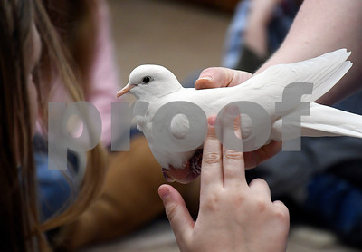2/10/2018 Mike Orazzi | Staff Angel, a dove at the New Britain Youth Museum at Hungerford Park during the Wild about Animals Valentine's Day Party on Saturday in Kensington.