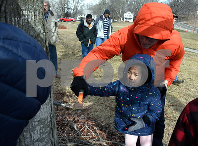 3/3/2018 Mike Orazzi | Staff Peter Lee and his daughter Vivienne,4, place a spout into a Maple trees during the annual Maple Festival held on the Plymouth Green Saturday.