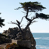 The Lone Cypress damaged