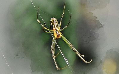 Watercolour Spider - 1.