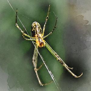 Watercolor Spider - 2.