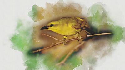 Honeyeater - Watercolour 1.