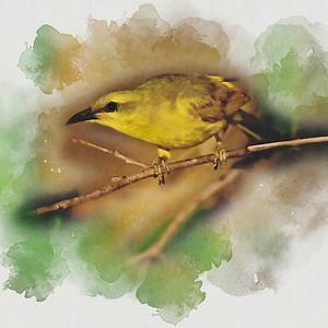 Honeyeater - Watercolour 2.