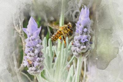 Busselton Bee -  Selective Watercolour.