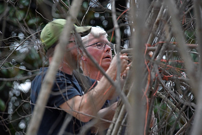 Artist Patrick Dougherty (right) and his son Sam work on the installation of his latest sculpture at Davidson College. The installation is slated to take 3 weeks.