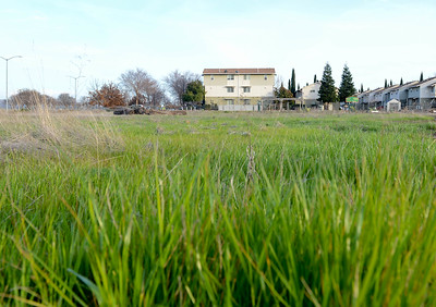 A ground level view of a grassy field Wednesday on the corner of Humboldt Road and Notre Dame Boulevard in Chico. The land is where the Chico Housing Improvement Project is proposing to build its new Creekside Place development. (Matt Bates -- Enterprise-Record)