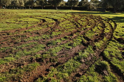Martin Luther King Jr. Park in Oroville, Monday, Feb. 3, 2020. The park was vandalized sometime between Friday and Saturday, when a motorist plowed through it, tearing up the grass. (Carin Dorghalli -- Enterprise-Record)