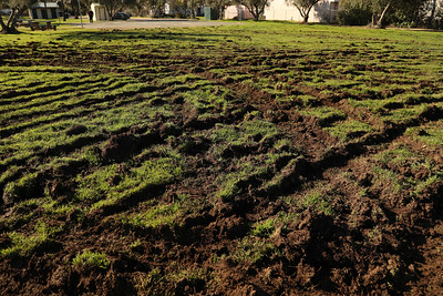 Martin Luther King Jr. Park in Oroville on Monday, Feb. 6. The park was vandalized between Friday evening and Saturday morning when a motorist plowed through it with an unknown vehicle, tearing up the grass. (Carin Dorghalli -- Enterprise-Record)