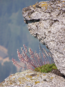 Even though all the far away things are too hazy to make a good picture, Pam found this flower growing out of the side of the cliff to take a picture of.
