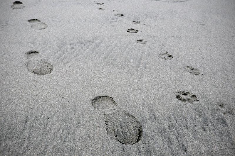 Paw/Foot prints