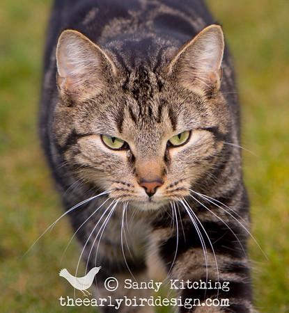 Cartmel Priory Cat Feb 2015