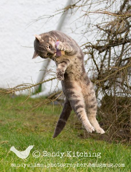 Cecil & Roger catnip! Mar 2016