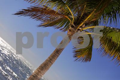 Dutch tilt of a palm tree water ocean background