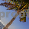 Dutch tilt of a palm tree water ocean background