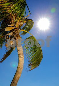 Palm tree lit with flash and sun glare flare