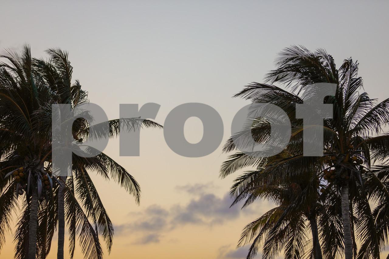 Miami palm trees at dusk