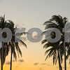 Twilight image of tropical Miami coconut palm trees
