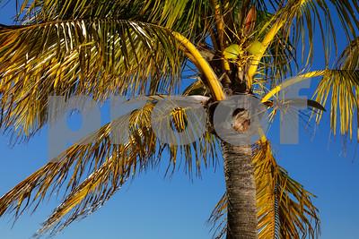 Palm tree on a deep blue sky